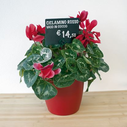 Picture of METAL PIN PRICE TICKET HOLDER WITH RING FOR FLOWERPOT