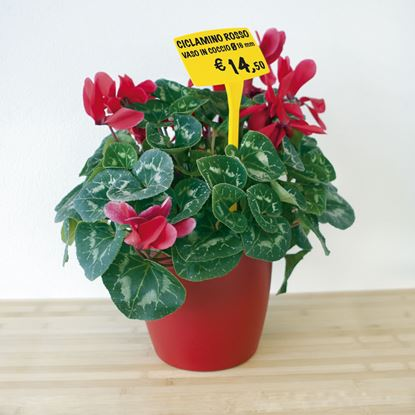 Picture of PLASTIC ANGLED PRICE TICKET HOLDER FOR FLOWERPOT